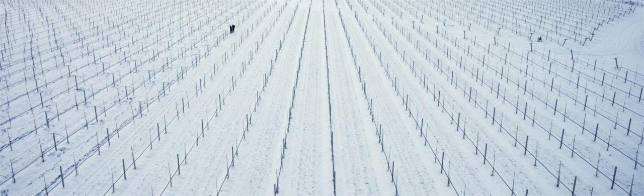 MiniKiwi Farm winter dron