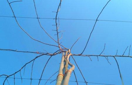 mini-kiwi-pruning3