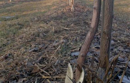 mini-kiwi-pruning4