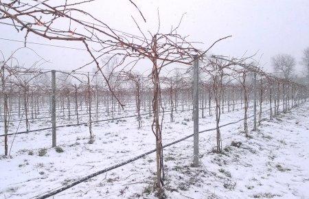 mini-kiwi-pruning7