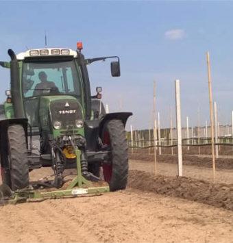 Plants rows preparation
